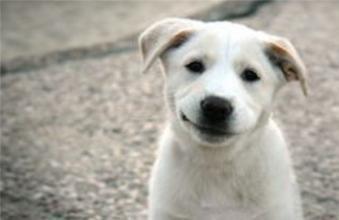 狗怕什么气味?狗害怕的气味简单介绍